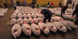 中国によるIUU漁業についての報告